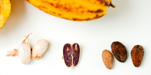 Everjean - Fresh Cacao from Sao Tome Principe