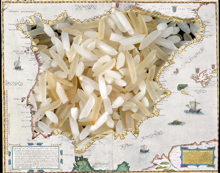 Rice map