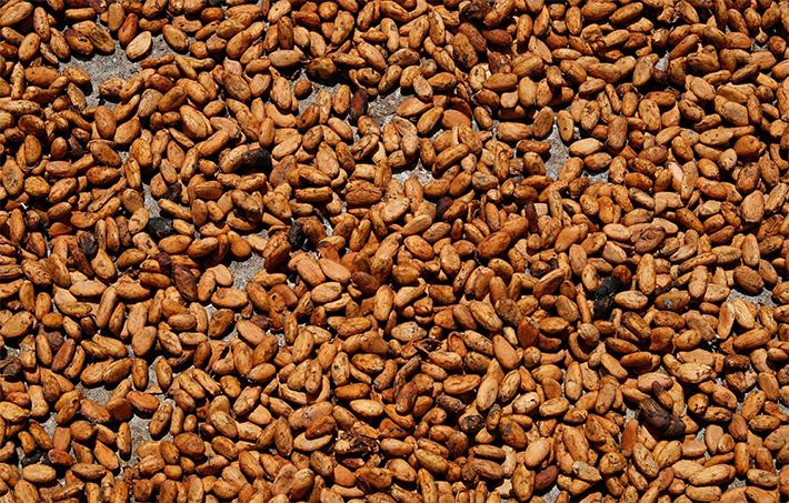 Tom Hart cocoa beans (flick)