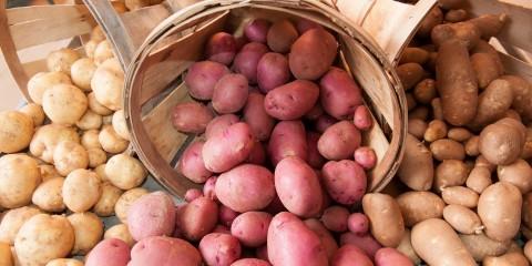 United Soybean Board Potatoes