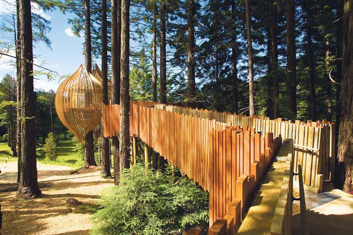 Restaurante Redwood TreeHouse 1