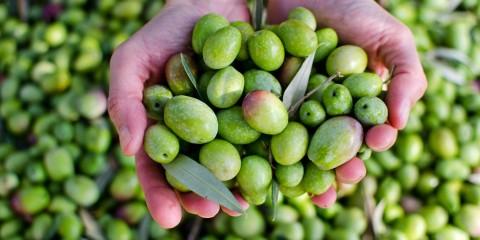 aceite de oliva portada