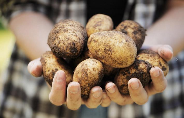 comete las ventas patatas la chulapona