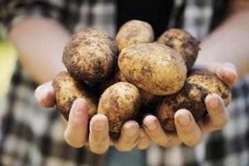 portada-planes-patatas-la-chulapona