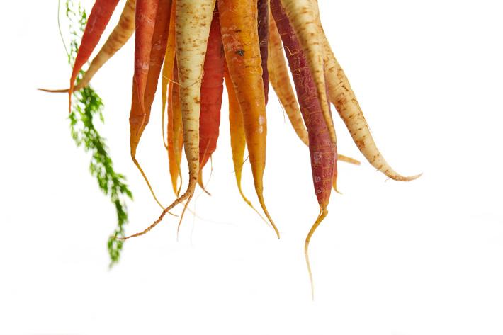 reacciones fisiologicas zanahoria