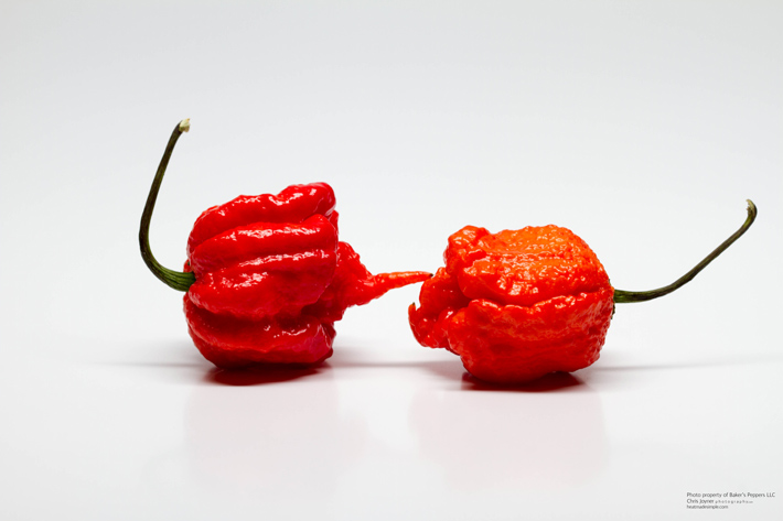 carolina reaper via bakerspeppers.com