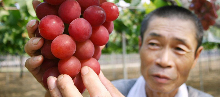 los productos mas caros del mundo uvas ruby roman