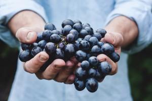 vinos-de-madrid-portada