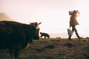 dia mundial de la leche portada