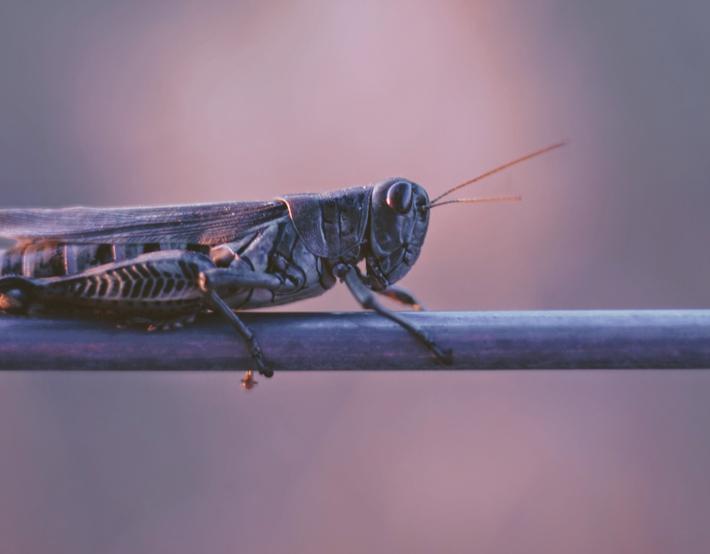 Entomofagia Comer Insectos 02