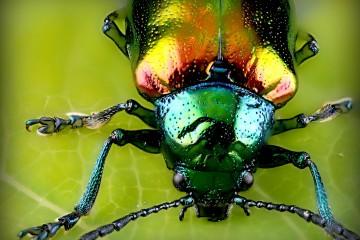 Entomofagia Comer Insectos Portada