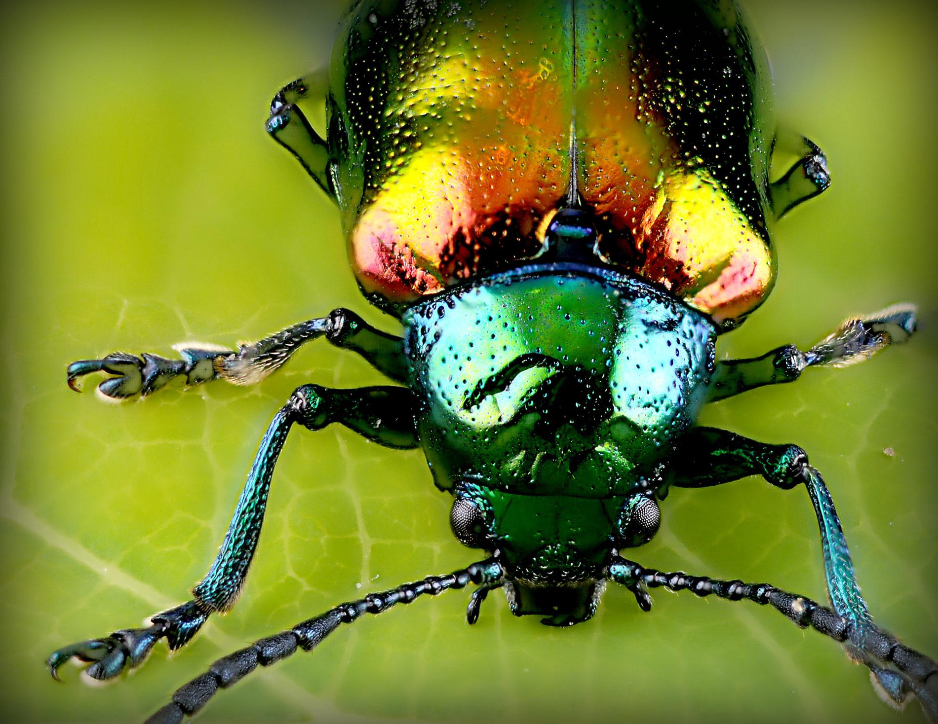Entomofagia, lo que debes saber antes de ponerte a comer insectos