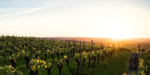 vinos mediterraneos portada