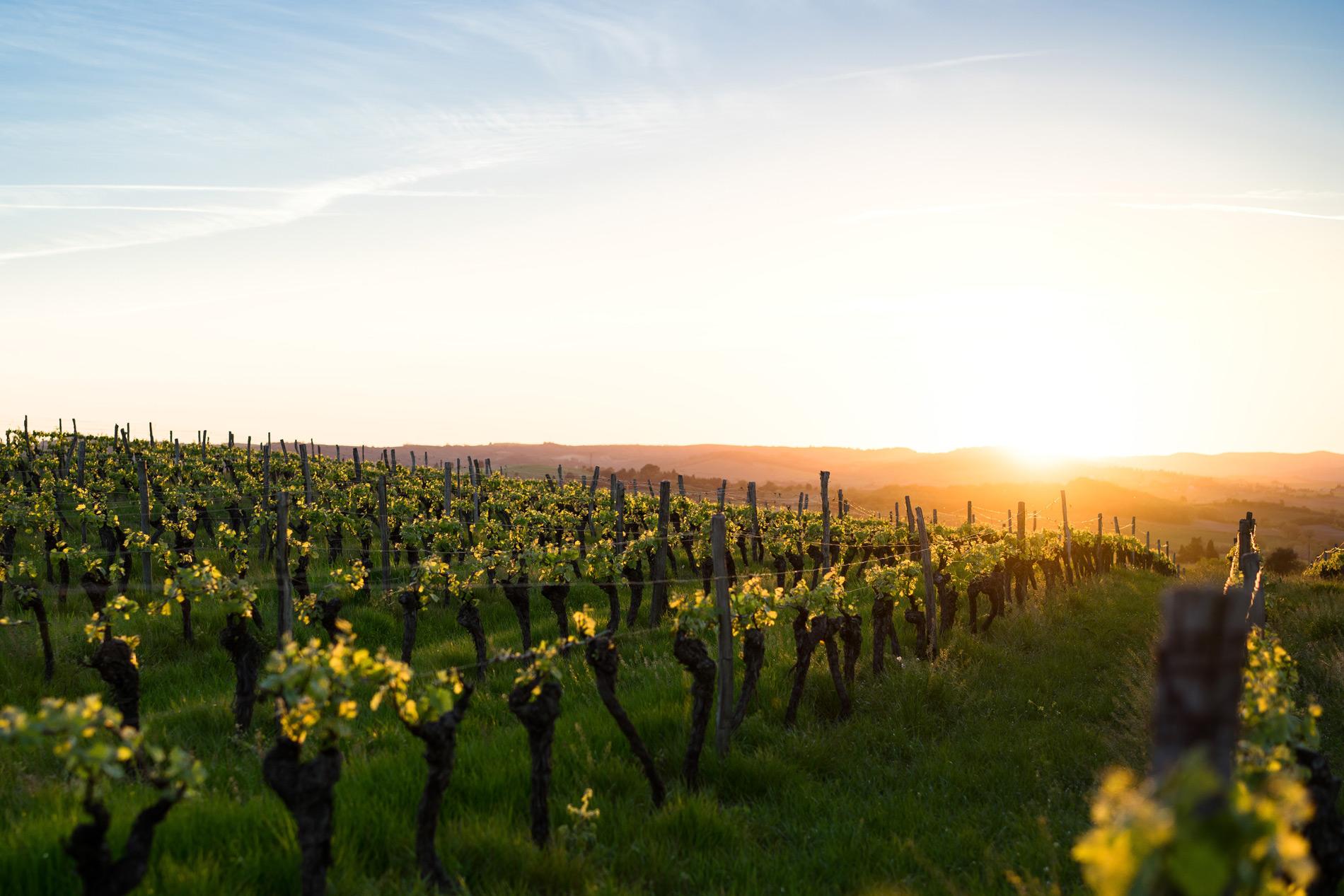 6 vinos mediterráneos que debes catar lo antes posible