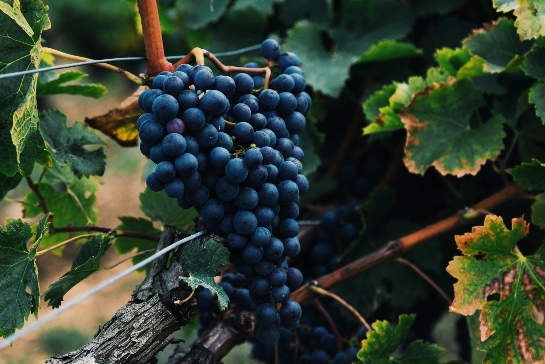 10 vinos de Rioja (que debes catar) por menos de 20 euros