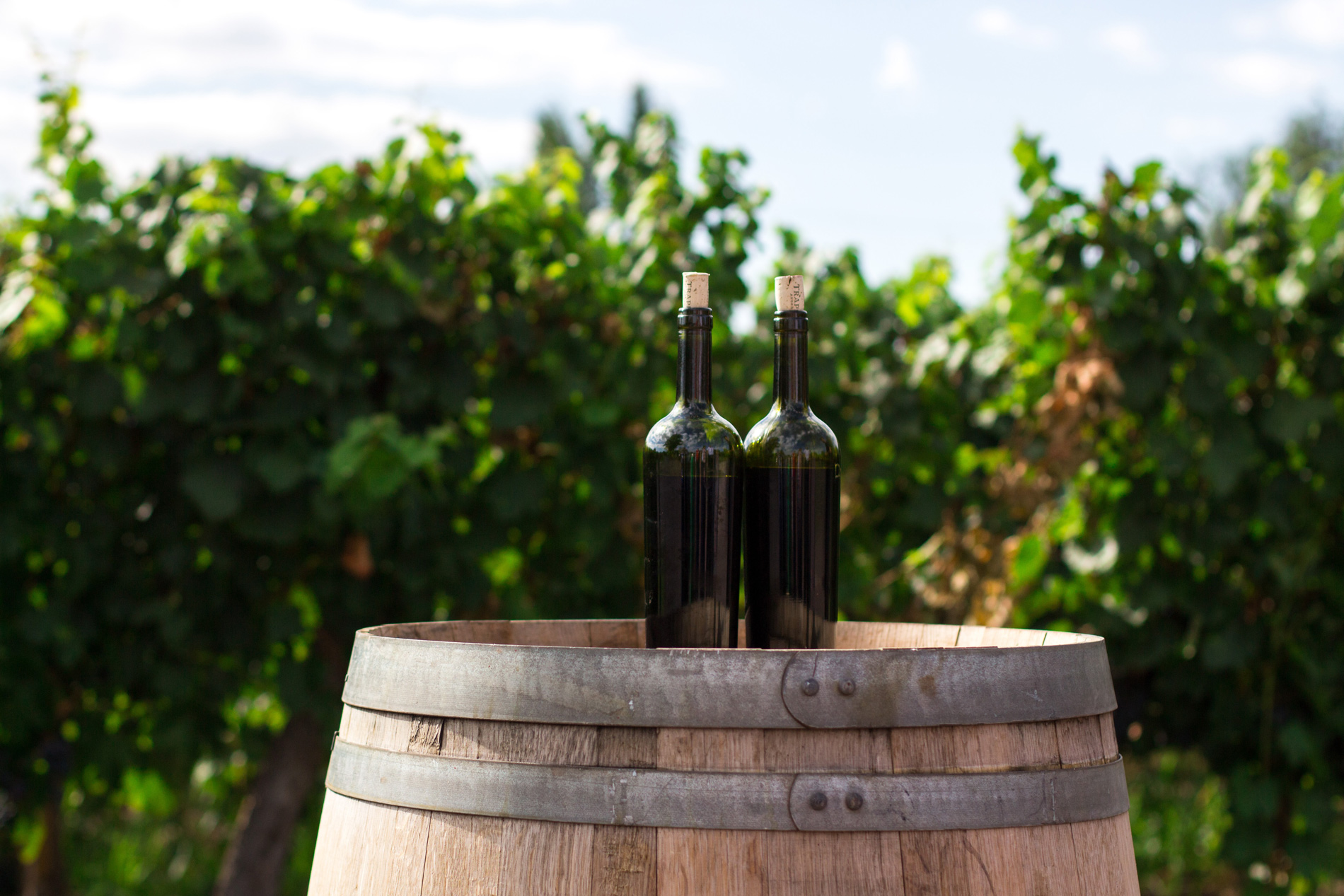 11 imprescindibles para adentrarse en el mundo de los vinos naturales