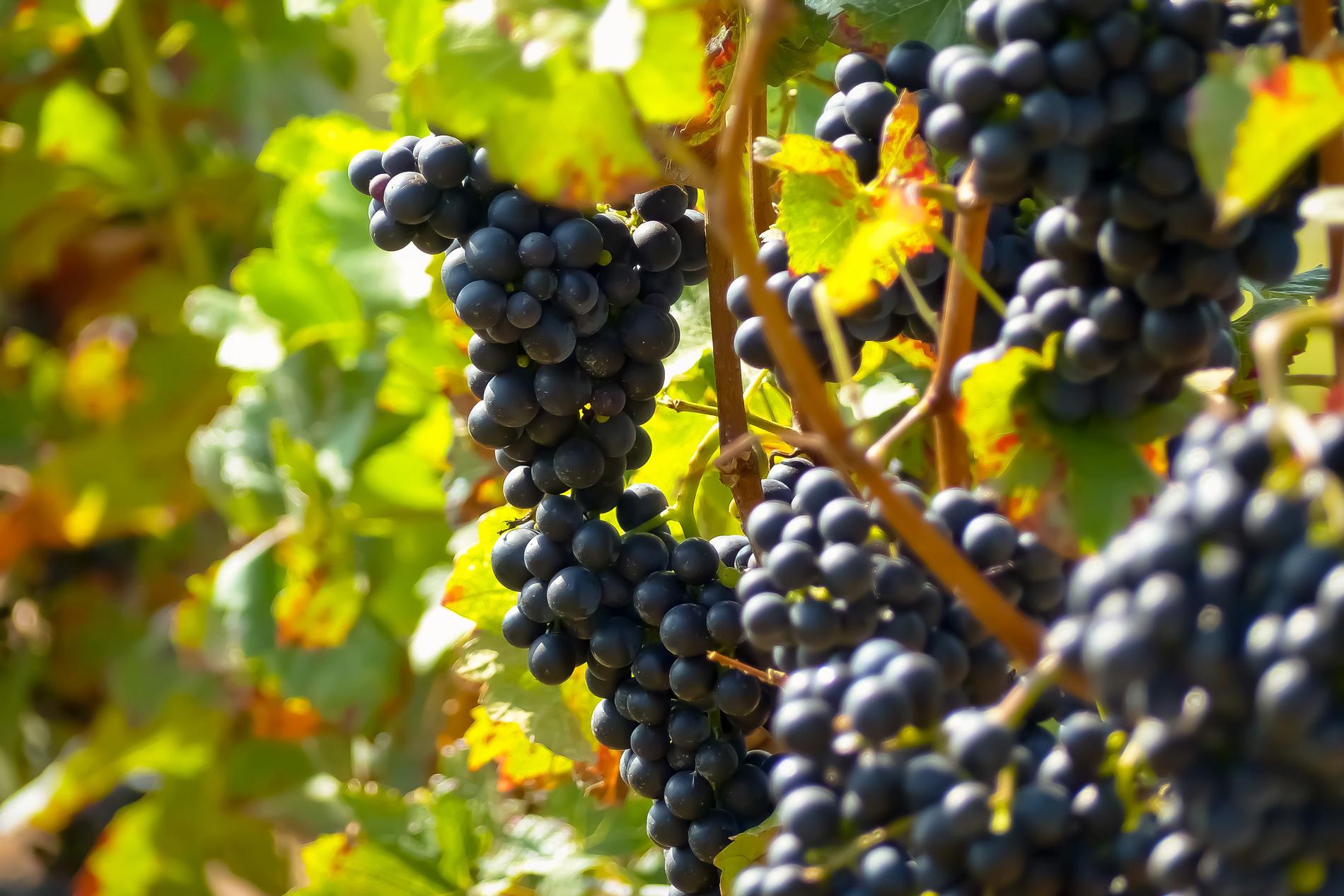 10 vinos del Priorat que debes degustar lo antes posible
